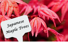 ornamental tree nurseries buy quality trees