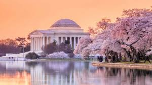 map cherry blossom festival street closures curbed dc 5 things