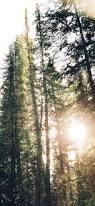 tree sunshine nature iphone x wallpaper download iphone
