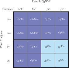 Endocrine System Concept Map Ap Biology Concept Map Concept Map