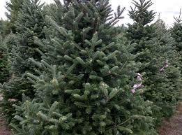 welcome u2014 cw christmas trees u0026 wreaths