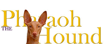 afghan hound club of st louis pharaoh hound club of america the pharaoh hound fanciers club