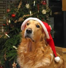 pet travel during holidays air pets america air pets america