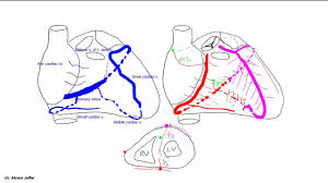 Heart Anatomy Arteries Blood Supply Of The Heart Youtube