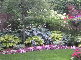 hosta garden with serviceberry tree in the foreground gorgeous