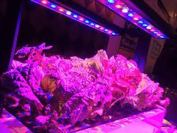 led marijuana grow lights how much energy do led marijuana grow lights save