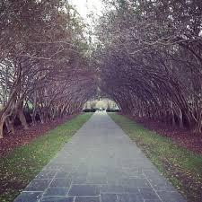 Dallas Arboretum And Botanical Garden Dallas Arboretum And Botanical Garden Dallas Tree Tunnel