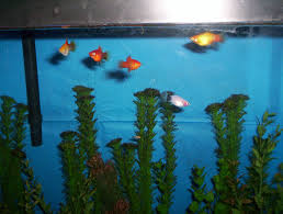 tails of the visions cardigans the inhabitants of the fish tank