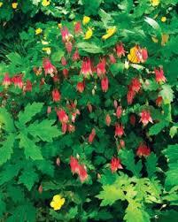perennials for the edge finegardening