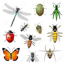 insects or bugs royalty free cliparts vectors and stock