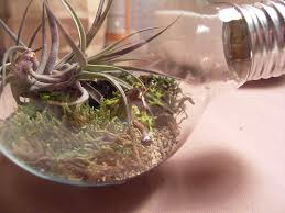 how to make a tiny terrarium in a light bulb the hipster home
