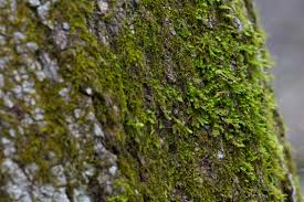 free picture tree trunk moss