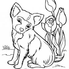 coloring pages chihuahua puppies chihuahua drawing at getdrawings com free for personal use