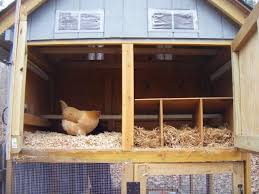 Backyard Chickens Forum by 54 Best Chickens Coop Images On Pinterest Chicken Coops