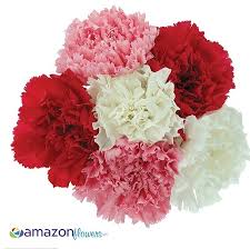 Wholesale Carnations Wholesale Carnation Bulk Carnation Wedding Carnation Fresh Cut