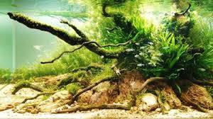 Nature Aquascape Underwater Gardens Award Winning Planted Aquariums La Times