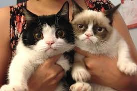 Grumpy Cat Photo 1 Best - introducing pokey grumpy cat s only slightly less grumpy younger