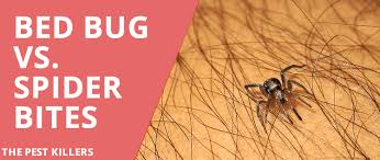 bed bug vs spider bite bed bug vs spider bite all you need to know thepestkillers