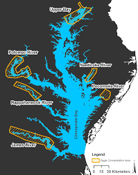 Chesapeake Bay Map The Center For Conservation Biology U2013 Bald Eagle Concentration