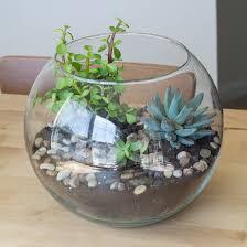 make a cute little succulent terrarium by brittany goldwyn