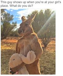 Kangaroo Meme - kangaroo memes are set to explode buy while the prices are low