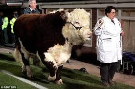 Fa Vase Prize Fund Hereford U0027s Ronaldo Set For Wembley Duty At Fa Vase Final But