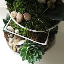 planter for succulents fresh and succulent