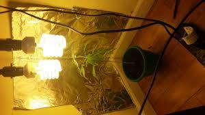 wil a 200 watt heat lamp grow marijuana grasscity forums