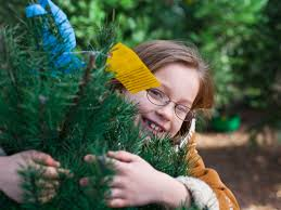 5 southern christmas tree farms southern living