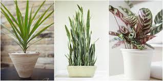 home plants decor best houseplants home interiror and exteriro design home