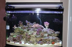 coralife t5 light fixture 30 inch coralife aqualight dual t5 l high output fixture