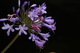 flowers san diego peenie wallie more san diego flowers