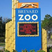 Things to Do with Kids in Melbourne  FL   TripBuzz Brevard Zoo