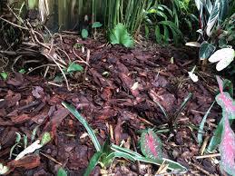 simple garden fixes miss smarty plants