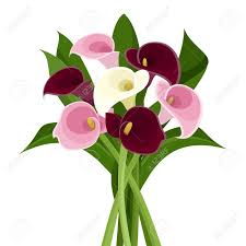 calla colors bouquet of colored calla lilies vector illustration royalty free