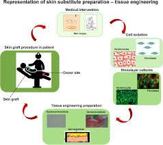 in vitro skin models and tissue engineering protocols for skin