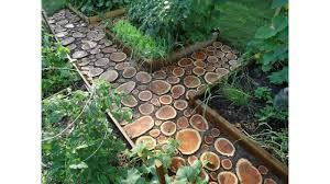 best tree for small garden youtube