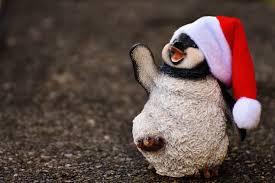 free images animal cute decoration christmas penguin close