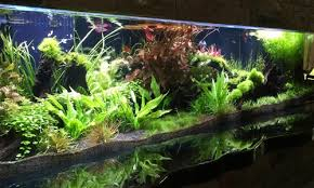 Aquascape Design Custom Aquarium Aquascape Design