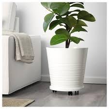 best indoor house plant livingroom succulent plants desk plants tall house plants