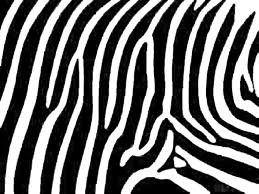 amper bae zebra print backgrounds
