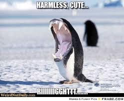 Cute Penguin Meme - world penguin day