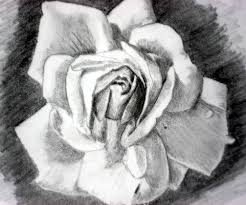 rose pencil drawings and rose sketches