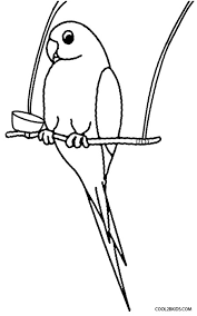 printable parrot coloring pages kids cool2bkids
