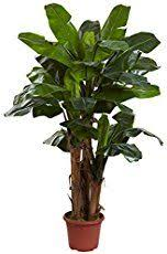 the 25 best large indoor plants ideas on pinterest indoor green