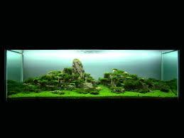 Takashi Amano Aquascaping Techniques Lion King Rock Aquarium Pinterest Aquariums And Lions