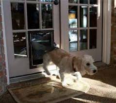 doggy door glass door maxseal french door pet door installation