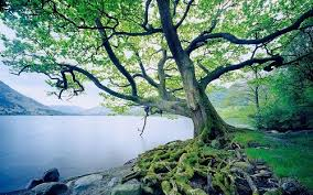 Judge A Tree By Its Fruit - meditation why and how bill johnson