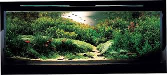 amano aquascape takashi amano aquascape nature aquarium photographs amanotakashi