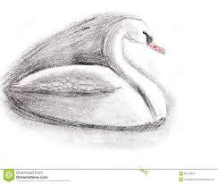 children drawing white swan stock illustration image 35614347